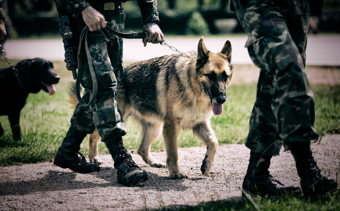 Soldier with military working dog.